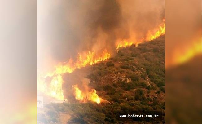 Çanakkale boğazında orman yangını meydana geldi!
