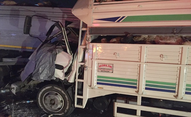 Kurbanlık taşıyan kamyonet ve TIR çarpıştı : 1 yaralı
