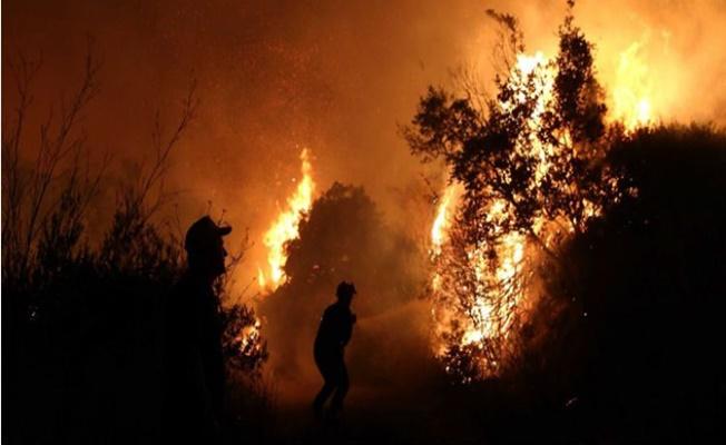 Bulgaristan'daki orman yangını sınıra dayandı!