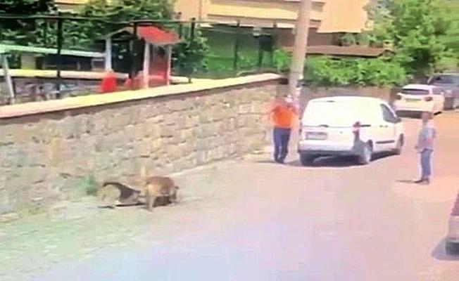 Yolda yatan köpeğin üzerinden geçti!