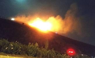Gebze'de çıkan yangında çok sayıda çam ağacı yandı