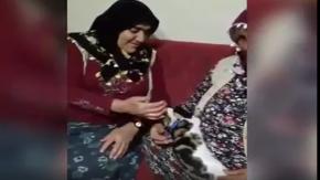 Hunharca Kedi Seven Teyzeler,Kedi Kendinden Geçiyor